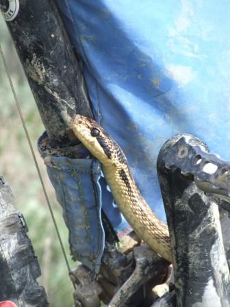 Любопытная змеюка